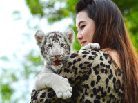 women hold baby white bengal tiger